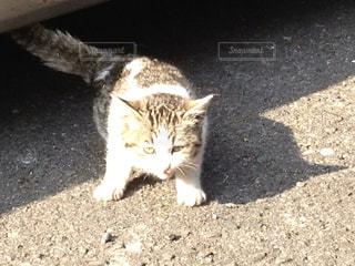 猫の写真・画像素材[479804]
