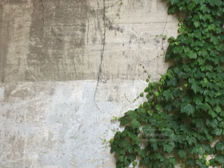 緑の写真・画像素材[495279]