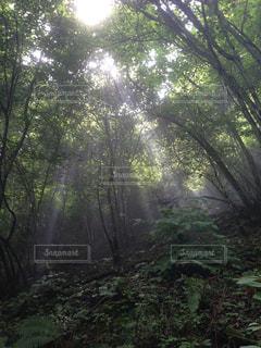 木の写真・画像素材[480172]