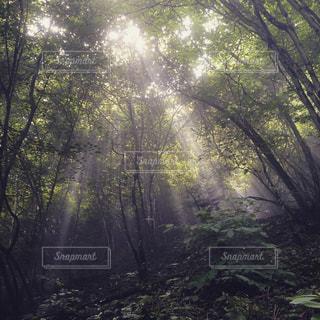 木の写真・画像素材[480173]