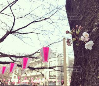 春の写真・画像素材[480199]