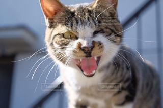 猫の写真・画像素材[480220]