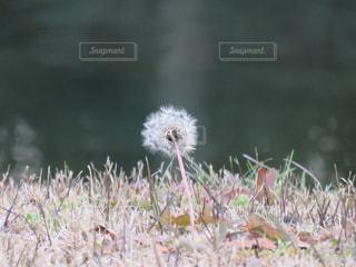 自然の写真・画像素材[480527]