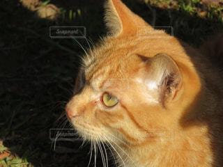 猫の写真・画像素材[480530]