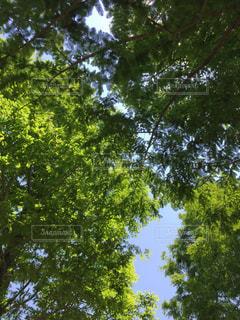 空の写真・画像素材[491314]