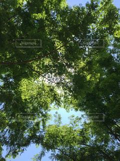 空の写真・画像素材[491317]