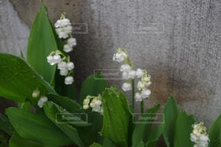 花の写真・画像素材[507804]