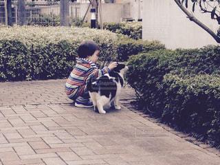猫の写真・画像素材[482906]