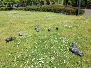 芝生の写真・画像素材[482967]