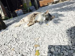 猫の写真・画像素材[492805]