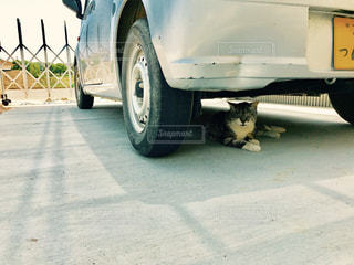 猫の写真・画像素材[493225]