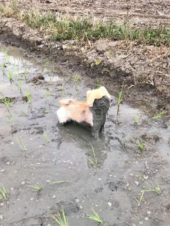犬の写真・画像素材[487215]
