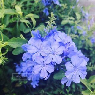 flowerの写真・画像素材[506582]