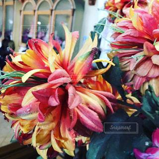 flowerの写真・画像素材[506584]