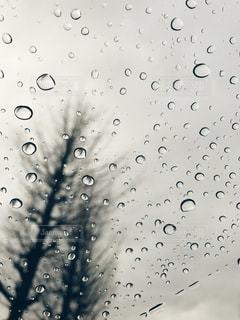 冬の写真・画像素材[481325]