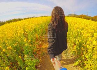 菜の花の写真・画像素材[481433]