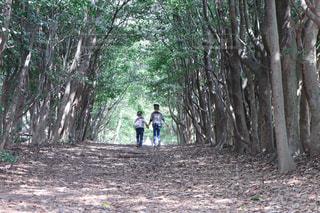 森林の写真・画像素材[2068003]