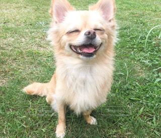 スマイル犬の写真・画像素材[2392891]
