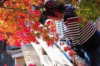 紅葉の写真・画像素材[2549761]