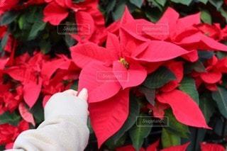 花のクローズアップの写真・画像素材[2553114]