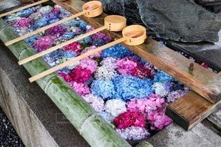 紫陽花の写真・画像素材[2553117]