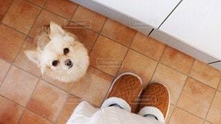 タイルの床に座っている犬の写真・画像素材[3145644]