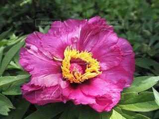 花の写真・画像素材[482892]
