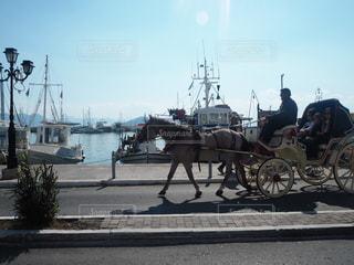 馬の写真・画像素材[482911]