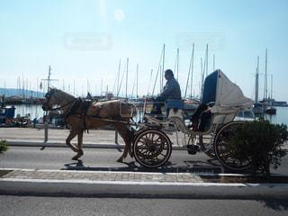 馬の写真・画像素材[482912]