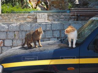 猫の写真・画像素材[482942]