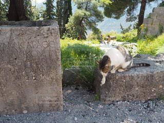 猫の写真・画像素材[483193]