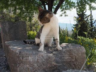 猫の写真・画像素材[483194]