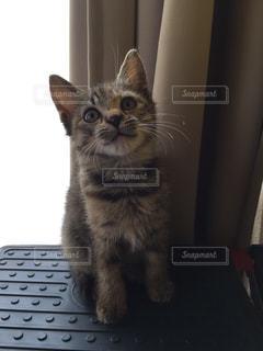 猫の写真・画像素材[481979]