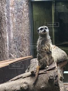 動物の写真・画像素材[481928]