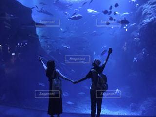 新江ノ島水族館の写真・画像素材[763876]
