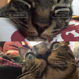 上から下から、ネコたんの写真・画像素材[845813]