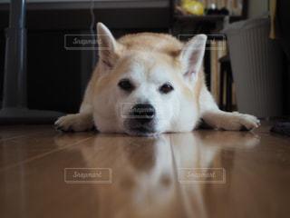 犬の写真・画像素材[484295]