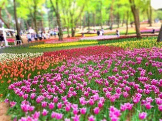 自然の写真・画像素材[89981]