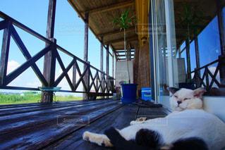 猫の写真・画像素材[159246]