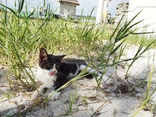 猫の写真・画像素材[239353]