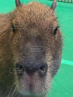 動物の写真・画像素材[482268]