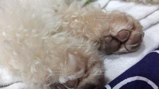 犬の写真・画像素材[482567]