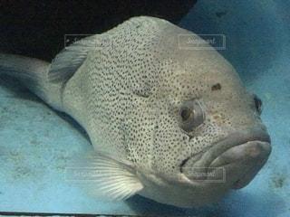 魚の写真・画像素材[483042]