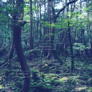 自然の写真・画像素材[482787]