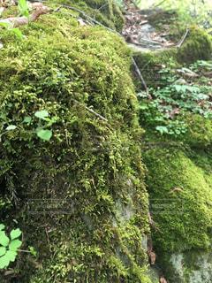 自然の写真・画像素材[483059]