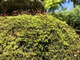 石灯篭に緑の苔の写真・画像素材[1216509]