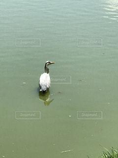 鳥の写真・画像素材[512438]
