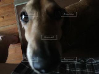 犬の写真・画像素材[489227]