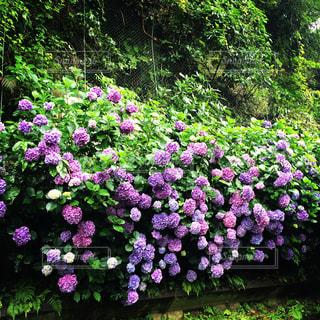 花の写真・画像素材[484918]