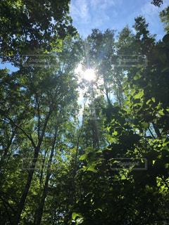 木の写真・画像素材[483598]